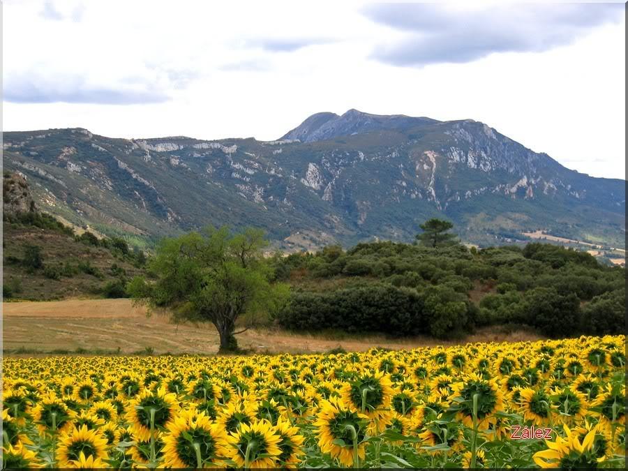 Montes obarenes (en www.valpuesta.com)