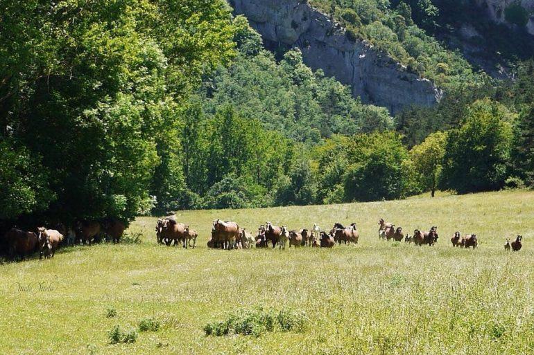 Parque natural de Valderejo - slide 7