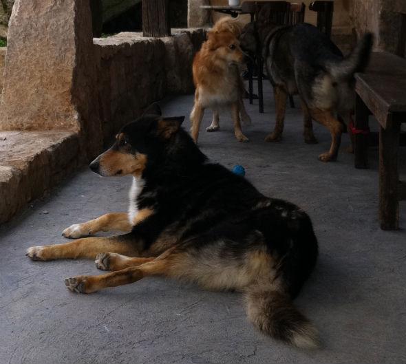 Perros en la puerta de Los Canónigos