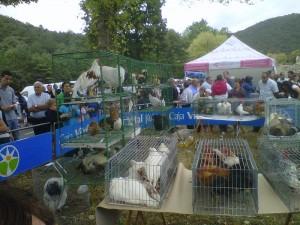 Aves de corral, a la venta en la Feria de Angosto