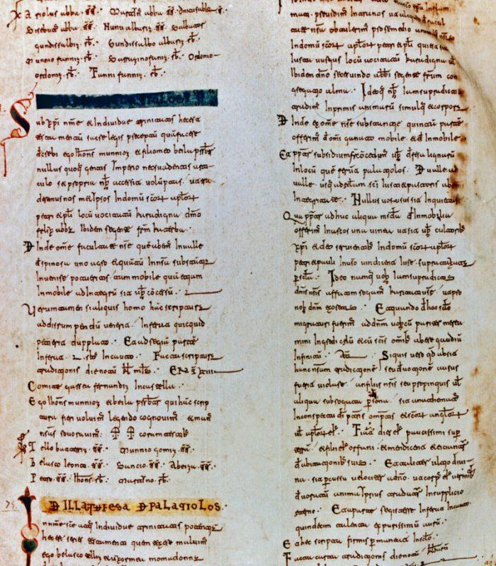 El becerro gótico de Cardeña, más datos sobre el nacimiento del castellano